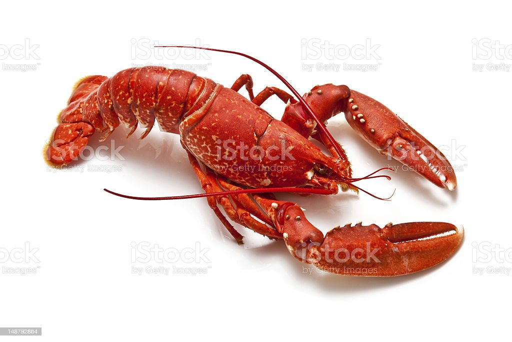 Lobster Pictures, Images and Stock Photos - iStock