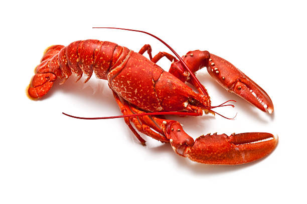 Red lobster isolated on white background stock photo