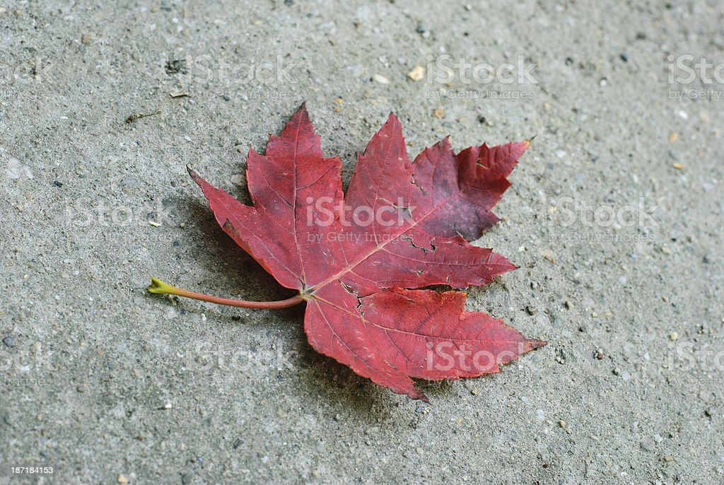 red loneliness royalty-free stock photo