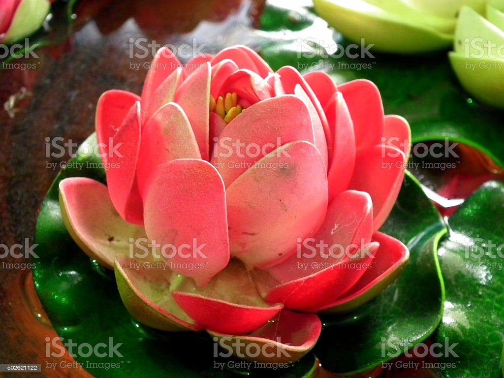 Red Lotus Flower Stock Photo More Pictures Of 2015 Istock