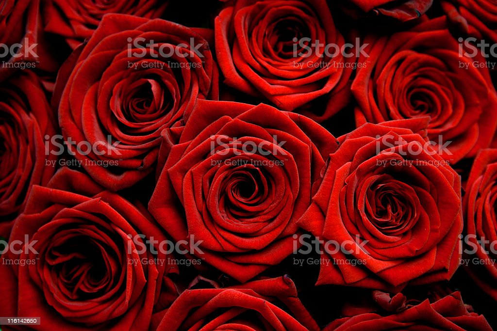 Red love royalty-free stock photo