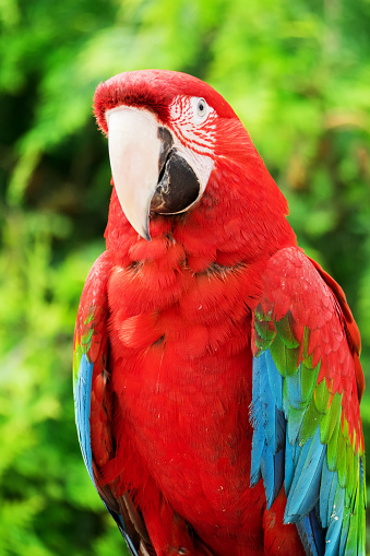 레드 마코앵무새 앵무새 0명에 대한 스톡 사진 및 기타 이미지