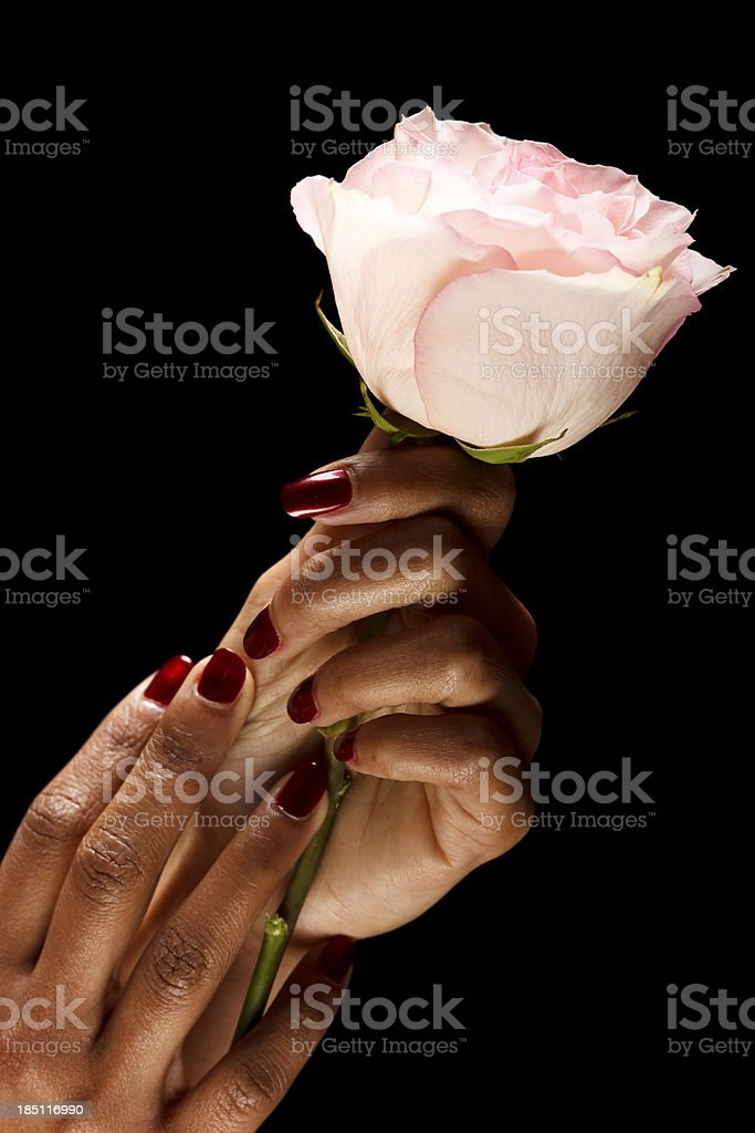 Red manicure + rose stock photo