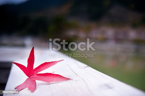 istock Red maple background 885599494