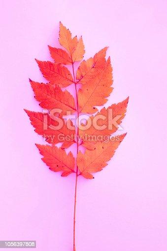 Autumn Leaf Color, Autumn, Grape, Plant, Season