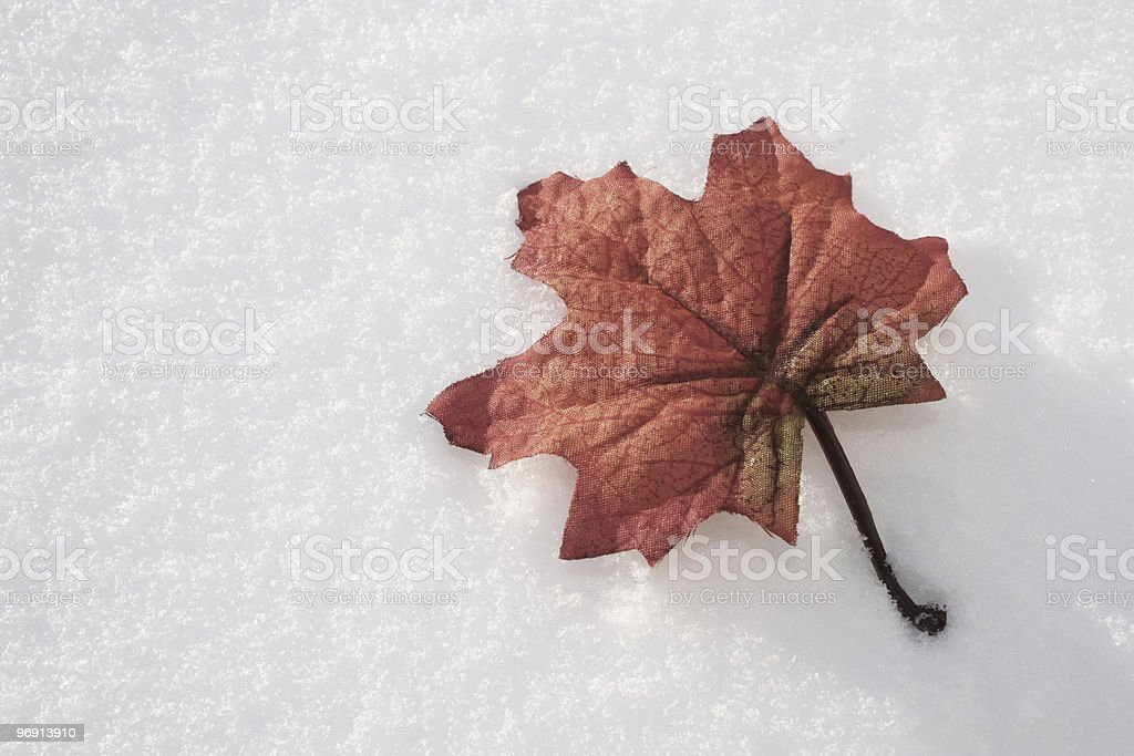 Red Maple Leaf on Fresh Snow royalty-free stock photo
