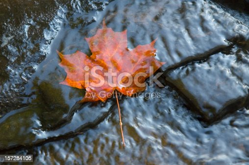 A single red maple leaf in a stream