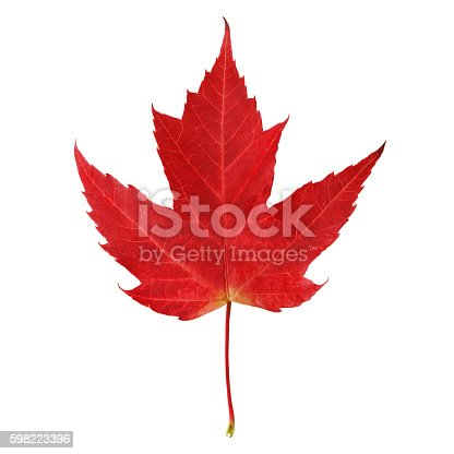 Red maple leaf isolated on white