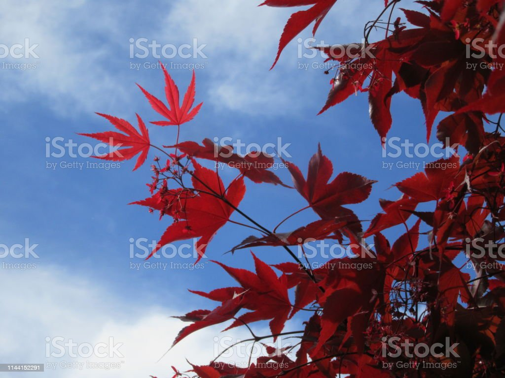The vibrant color is accentuated against the spring sky