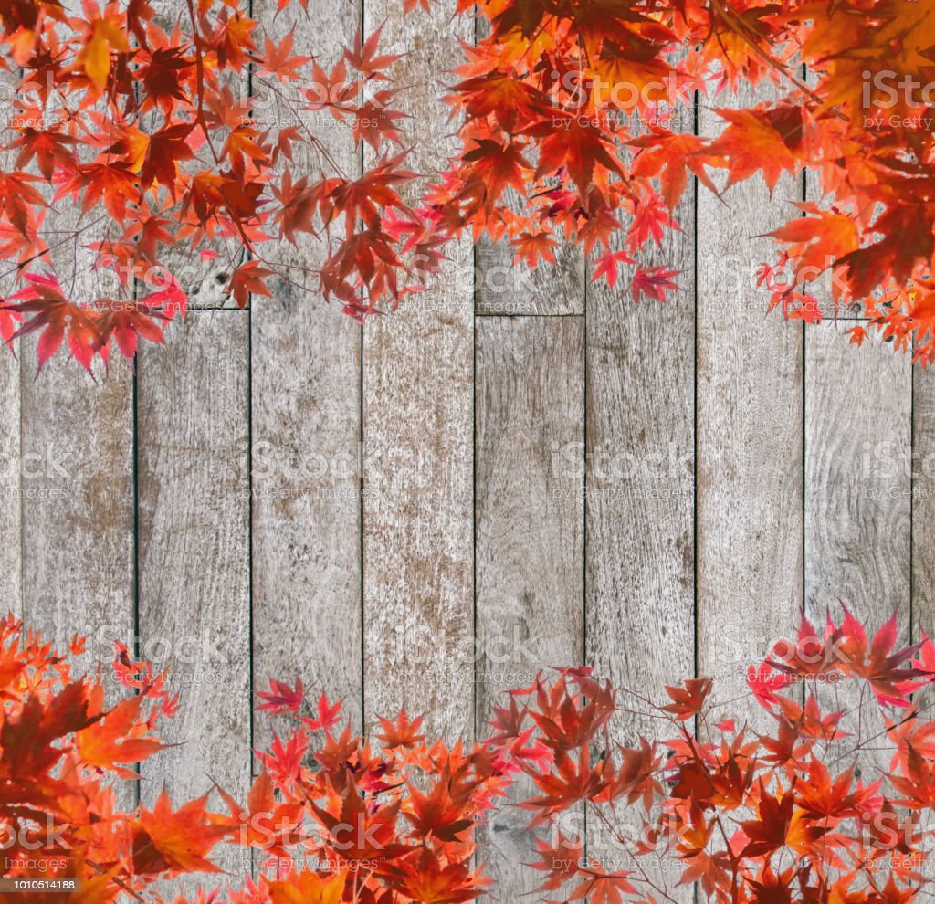 Red Maple Leaves Arch Cover On Wooden Background Stock Photo