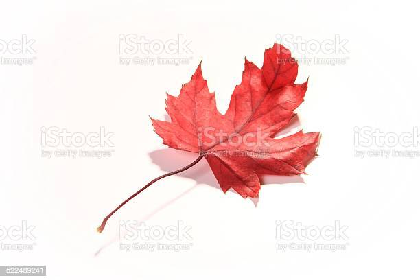 Photo of Red Maple