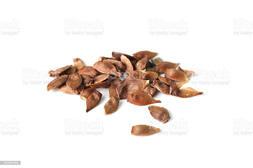 Red maple seed stock photo
