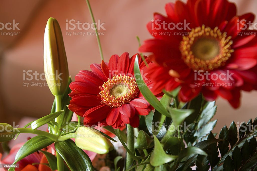 Red margarets royalty-free stock photo