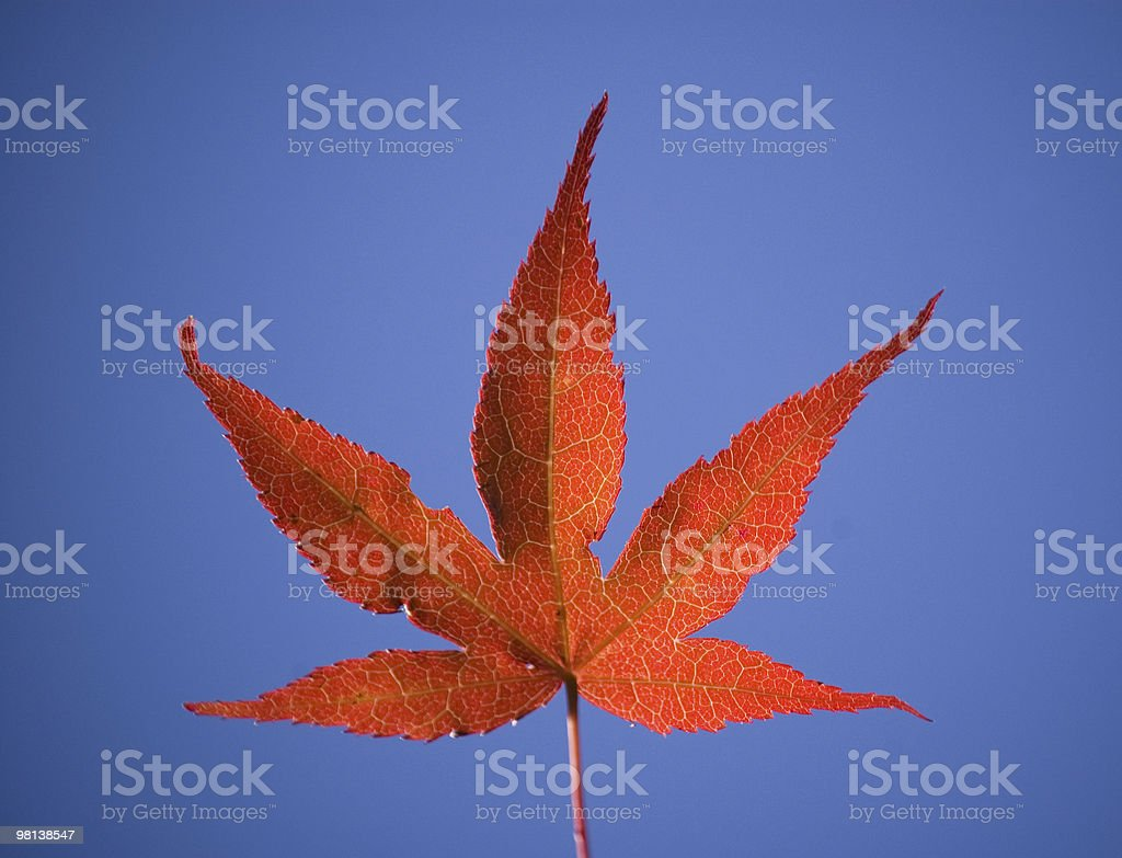 Red marihuana leaf royalty-free stock photo