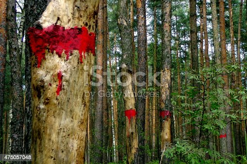 175407085 istock photo Red marks on the trees. 475057048