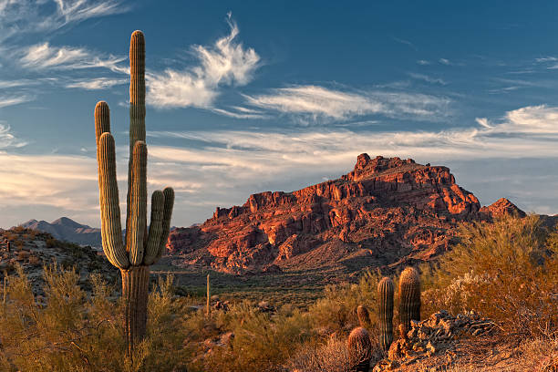 Red Mountain and Saguaro Cactus stock photo