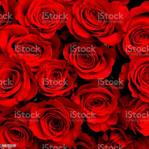 Red natural roses background picture id890723128?b=1&k=6&m=890723128&s=612x612&h=b9qv prdww3fx6pwrlwdstjx5lj2qfb1xllh0lz0tt8=