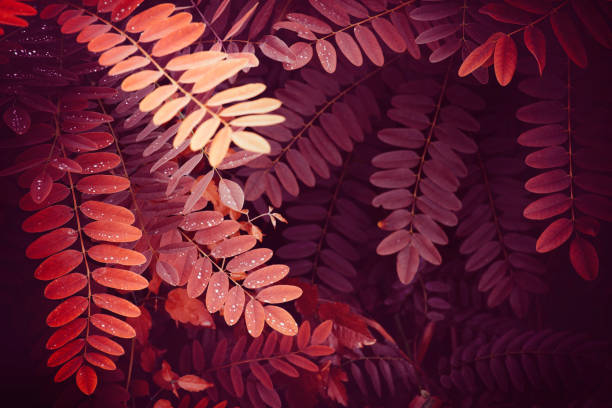 Red nature leaves background stock photo