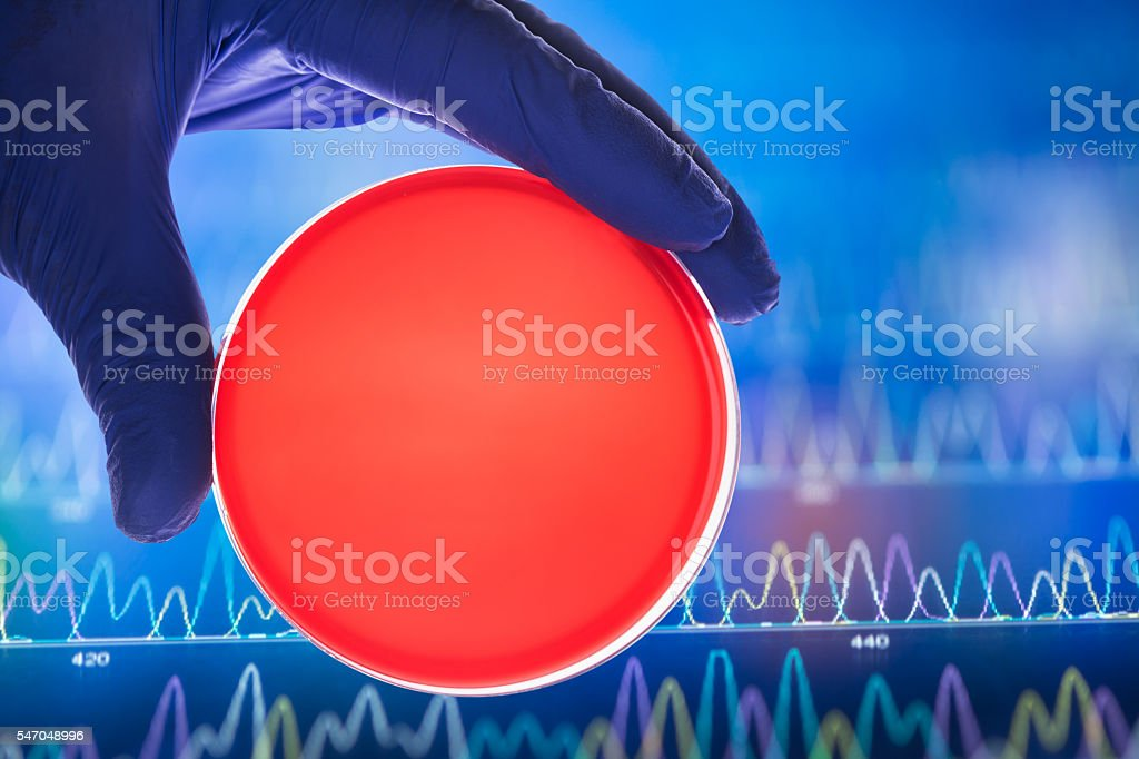 red nutrition with agar in petri dish stock photo