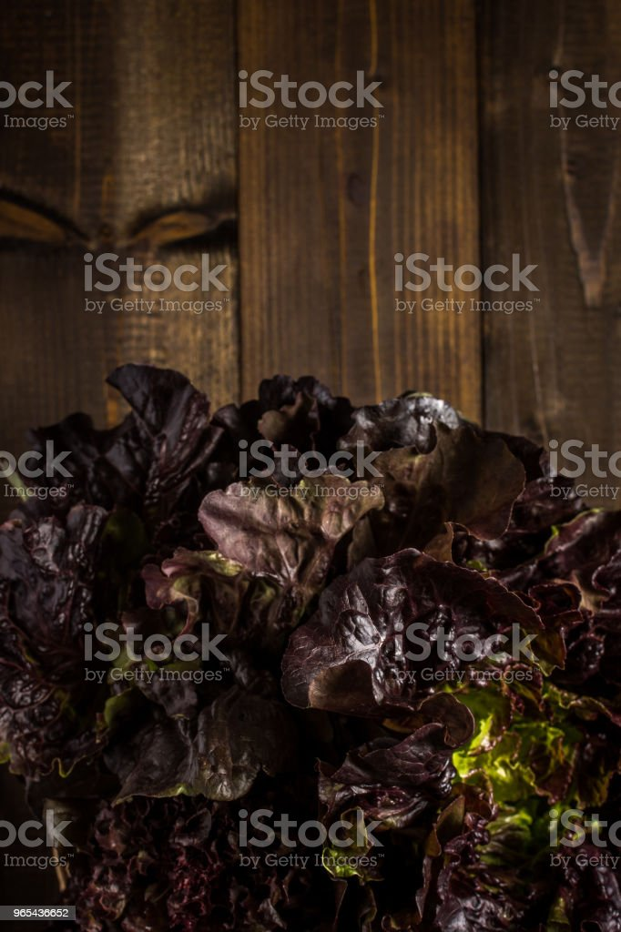 Red Oak Leaf Lettuce on Dark Wooden Background with Copy Space zbiór zdjęć royalty-free