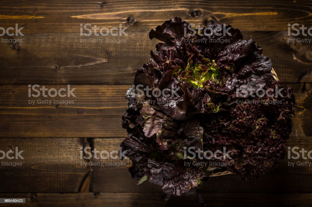 Red Oak Leaf Lettuce on Dark Wooden Background with Copy Space royalty-free stock photo