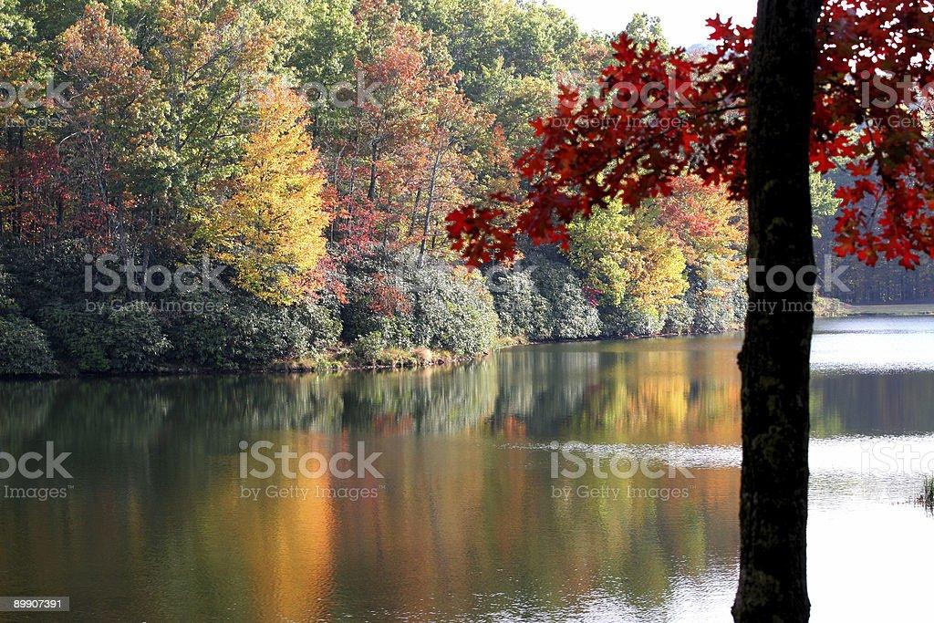 Красный Дуб листья Стоковые фото Стоковая фотография