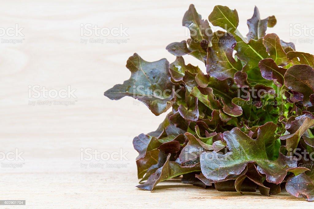 Red Oak Lettuce stock photo