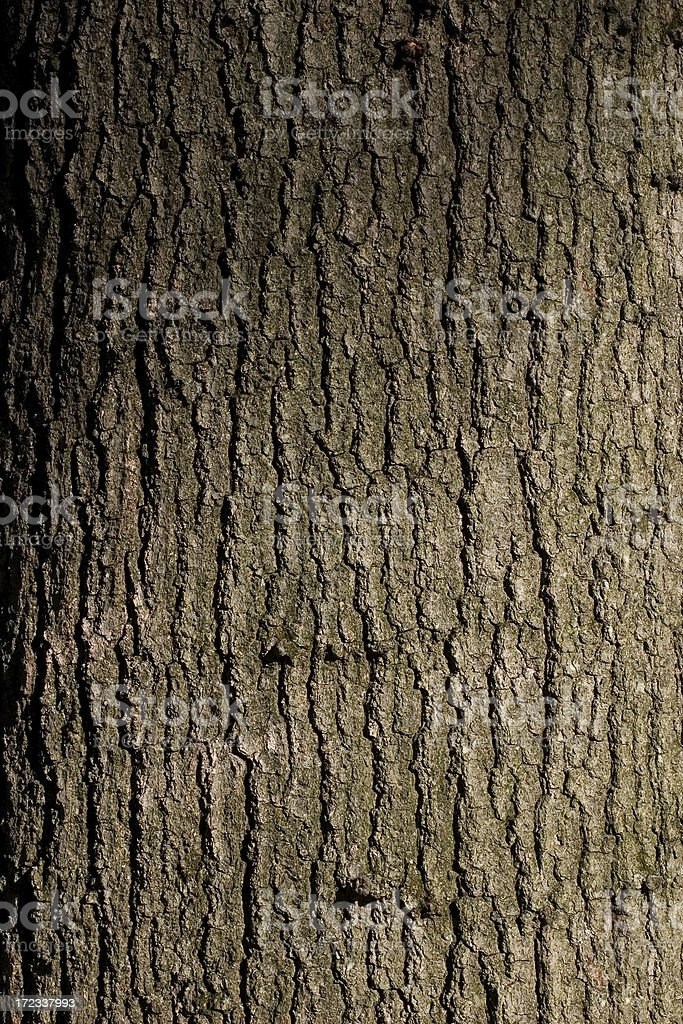 Red Oak Texture royalty-free stock photo