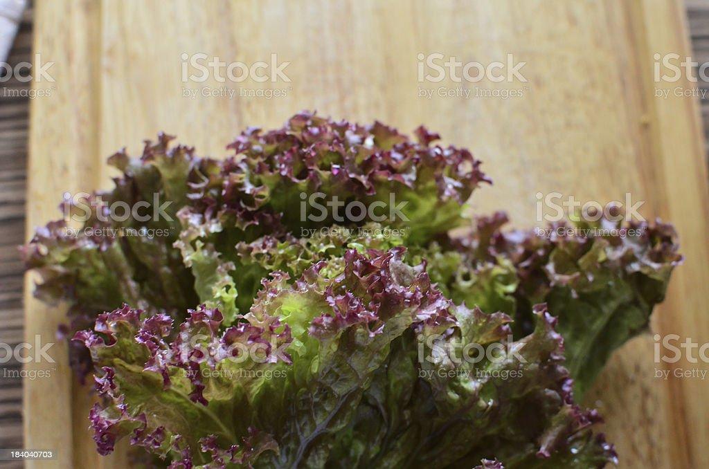 Red Oakleaf Lettuce royalty-free stock photo