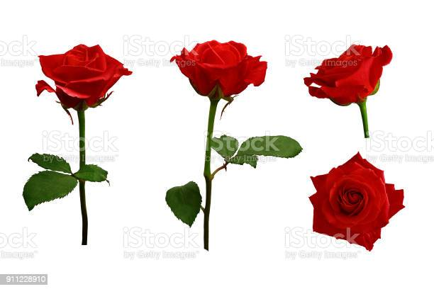 Red or scarlet roses with green leaves isolated white background picture id911228910?b=1&k=6&m=911228910&s=612x612&h=p7c  evcms6yevw2jgmo6yhlvp2mduwftucxaauezz4=
