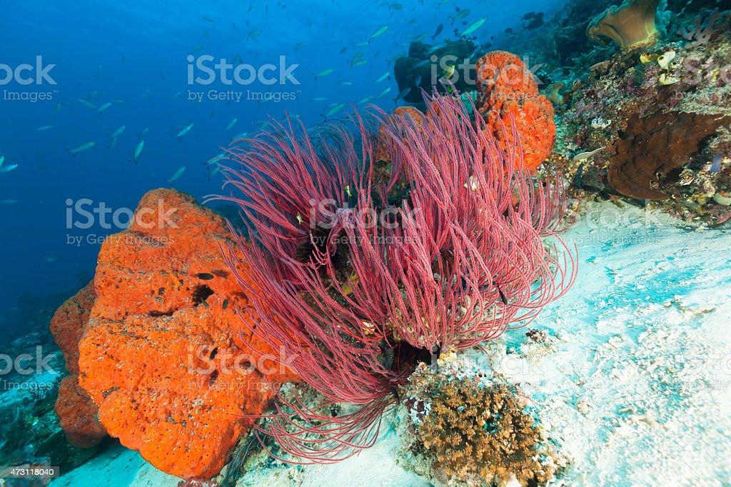 Red, Orange, Big Blue of Tropical Ocean, Raja Ampat, Indonesia stock photo