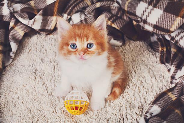 Red orange cute kitten at blue wood picture id538196784?b=1&k=6&m=538196784&s=612x612&w=0&h=himgwk37cwd7dy4ndpizdcfjpyspc4s8oyzbmrzorik=