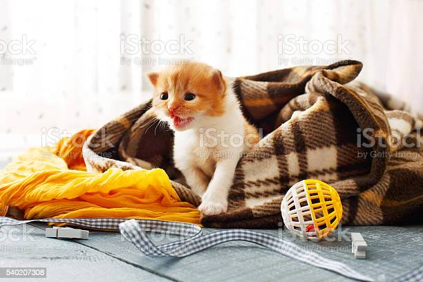 Red orange newborn kitten in a plaid blanket picture id540207308?b=1&k=6&m=540207308&s=612x612&h=t9drek7ad zpvh50bsgcohtpxvg yunid5b1 spb2ye=