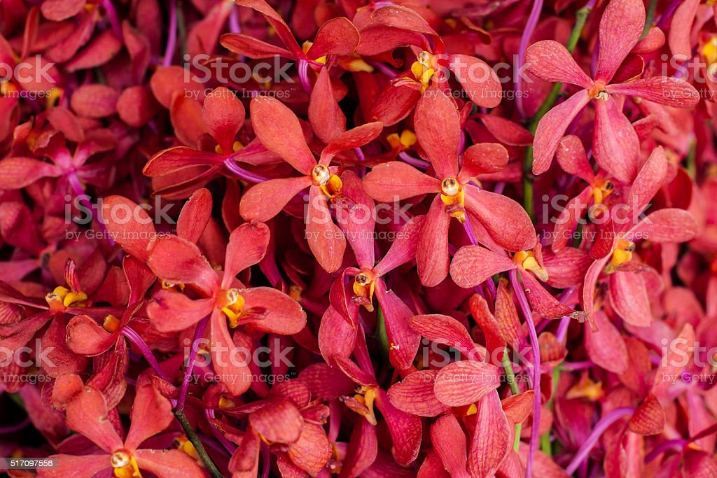 Red orchids background stock photo
