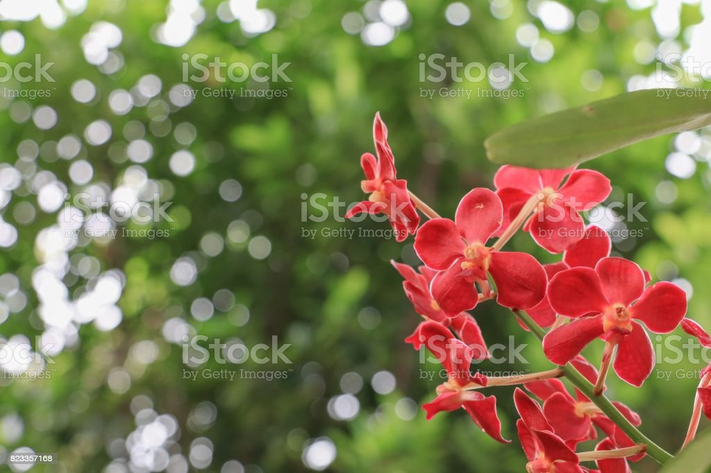 red orchids flower bright beautiful in nature stock photo