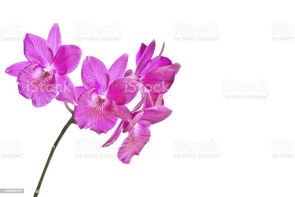 Red Orchids stock photo