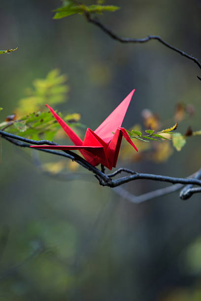 Red Origami Crane On A Tree Branch Pictures Images And Stock Photos