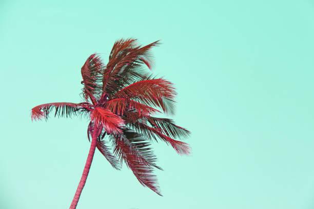 red palm bäume silhouetten gegen pastell sonnenuntergang auf einem hellen grünen himmel. silhouetten von palmen vor dem hintergrund einer getönten himmel. design mit textfreiraum. surrealistische landschaft und design - venice beach in kalifornien stock-fotos und bilder