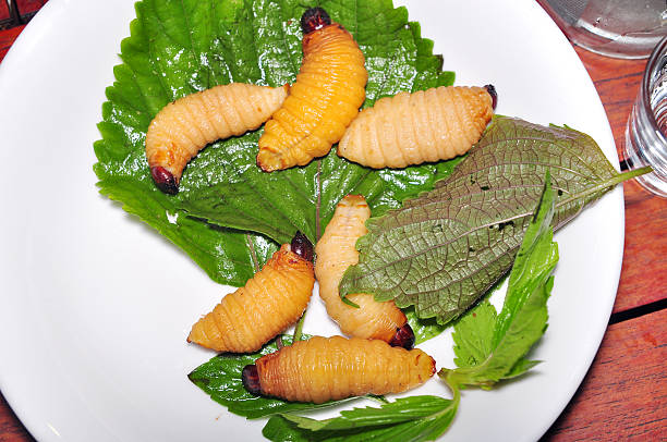 le palmier rouge charançon larve ou de noix de coco ou rhynchophorus ferrugineus ver - jungle menu photos et images de collection