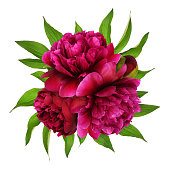 istock Red peony flowers with green leaves in a floral arrangement 1156263239
