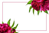 istock Red peony flowers with green leaves in a floral arrangements with a frame 1171649161