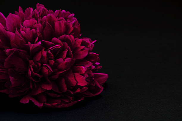 Royalty Free Flower Black Background Pictures, Images And