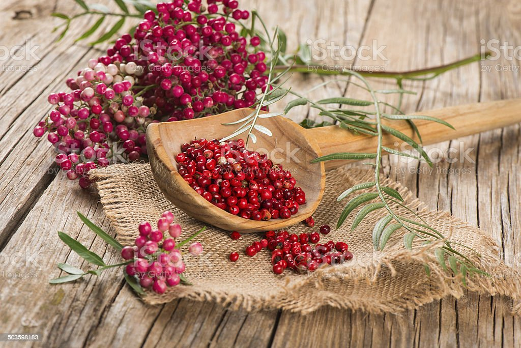 red peppercorns on a twig and dry in   wooden spoon stock photo