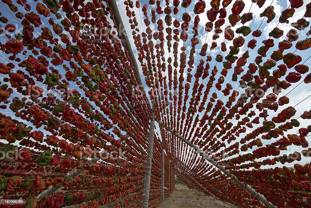 Red Peppers drying. stock photo