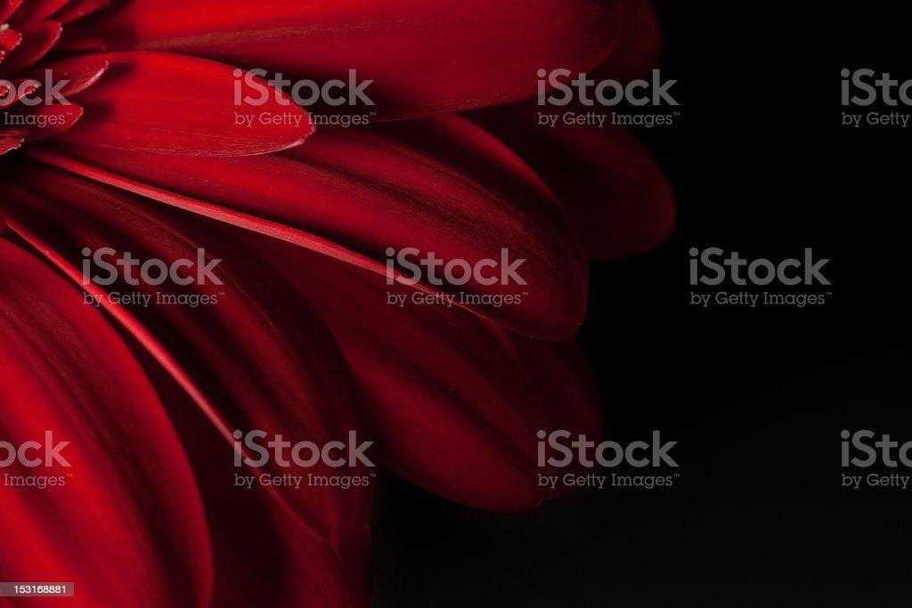 Red petals stock photo