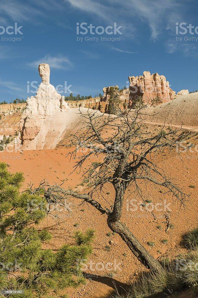 Red pinnacles (hoodoos) of Bryce Canyon, Utah, USA royalty-free stock photo