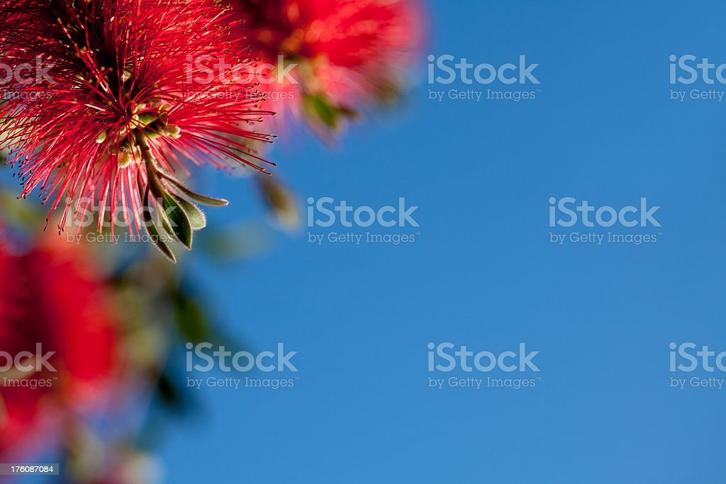 Red Pipe Brush Background stock photo