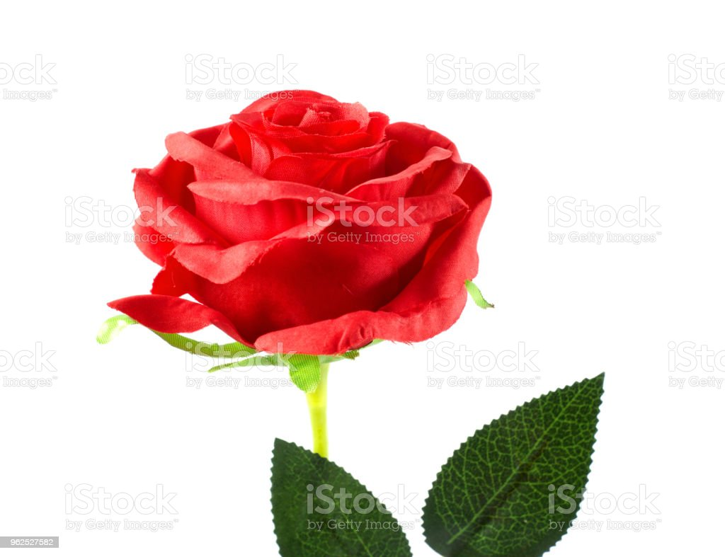 red plastic rose on white background - Royalty-free Beauty Stock Photo