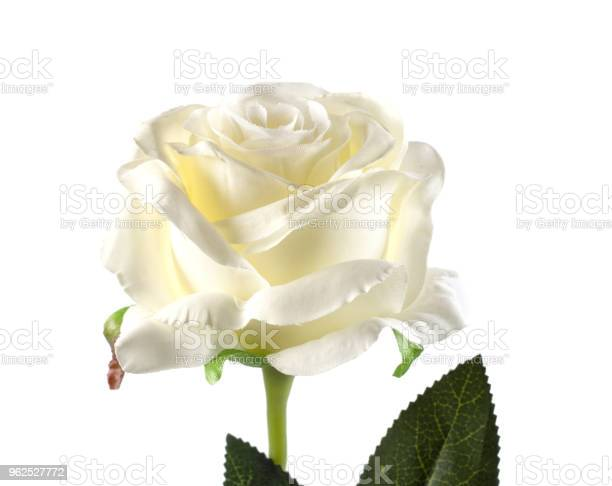 Foto de Rosa De Plástico Vermelha Em Fundo Branco e mais fotos de stock de Amarelo