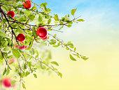 Red Plum branch on sky background in garden